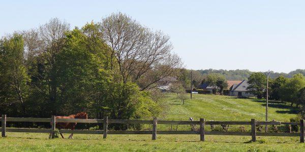 Les vertes prairies normandes