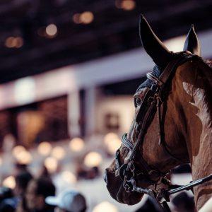 portrait-cheval-entree-piste(pp_w860_h573)